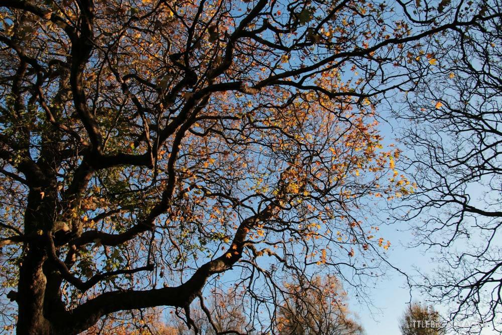 Baum im Stephen´s Green Park