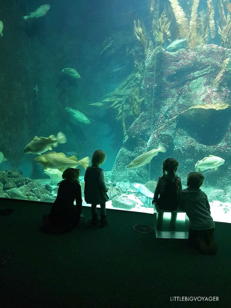 Kinder beim Beobachten der Fische im Aquarium