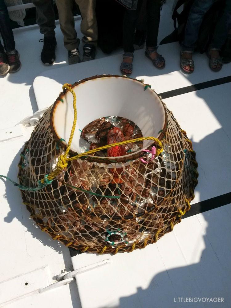 Krabben im Fangkorb im Exploramer