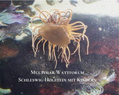 Unterwasserwelt Wattforum Tönning