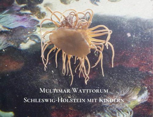 Multimar Wattforum – die Nordsee entdecken mal anders