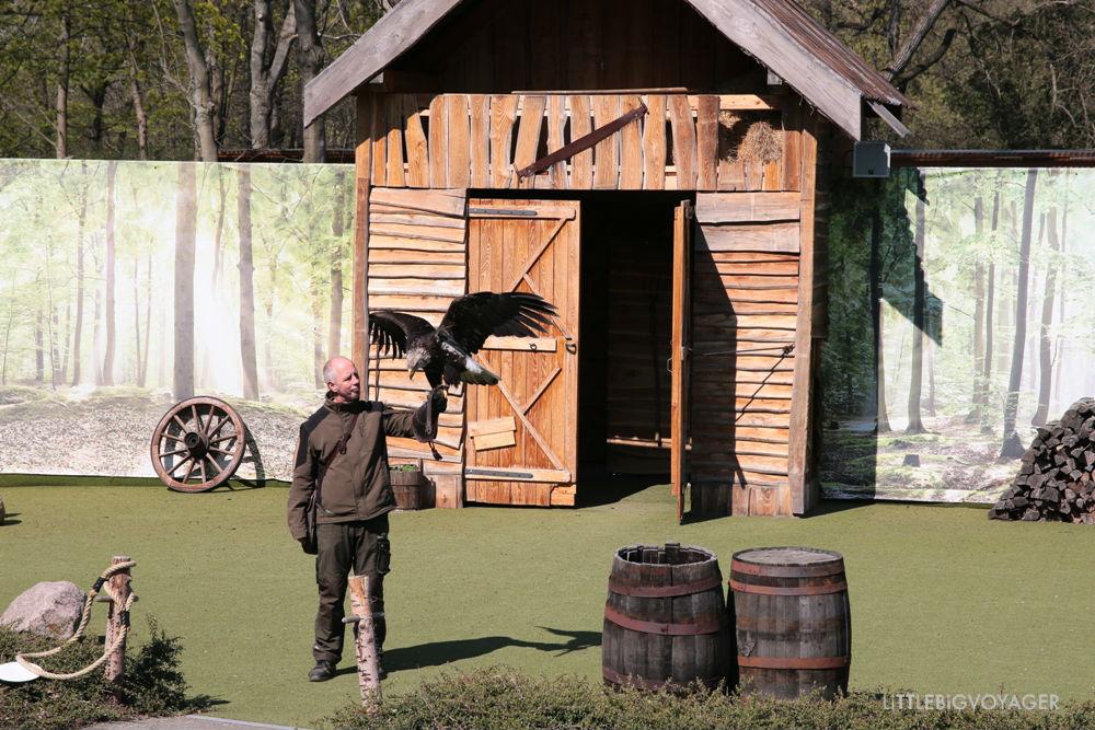 Falknershow im Tierpark Berlin