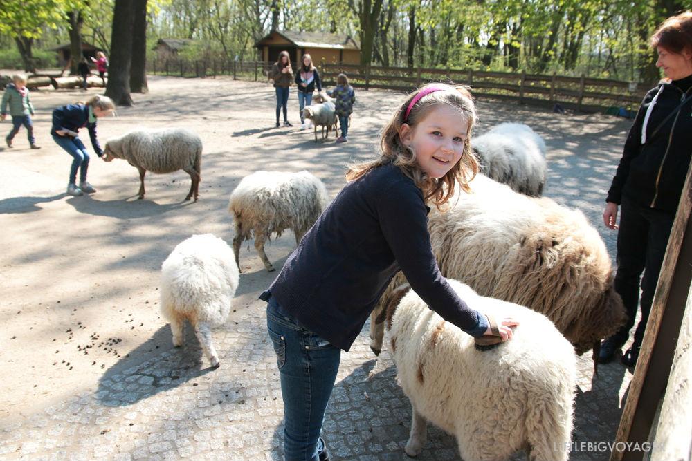 Schafe striegeln im Streichelgehege